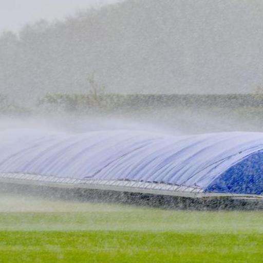 rainy-cricket.jpg